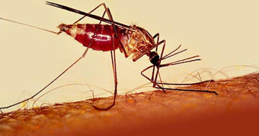 Что такое малярия