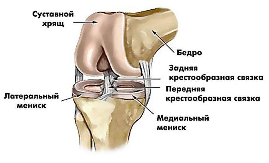 Травматология коленного сустава мениск связки после родов болят все суставы что делать